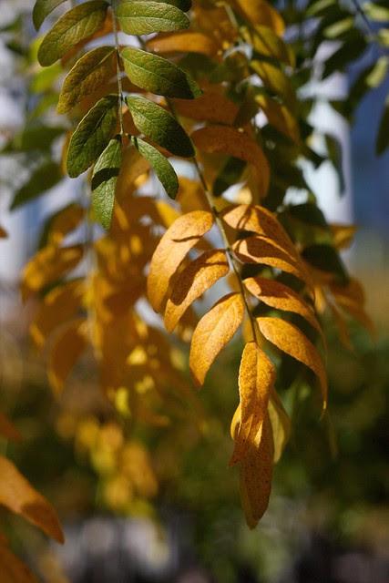 autumn leaves, jamison square