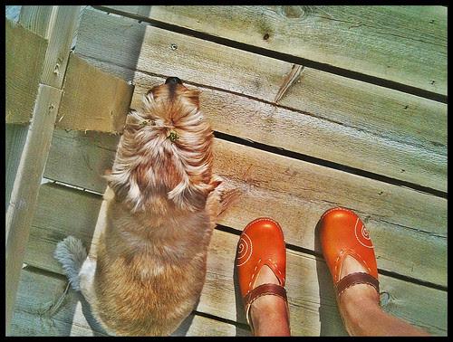 shoe per diem with malte