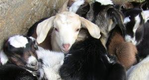 Achadinha Kids in a Cuddle