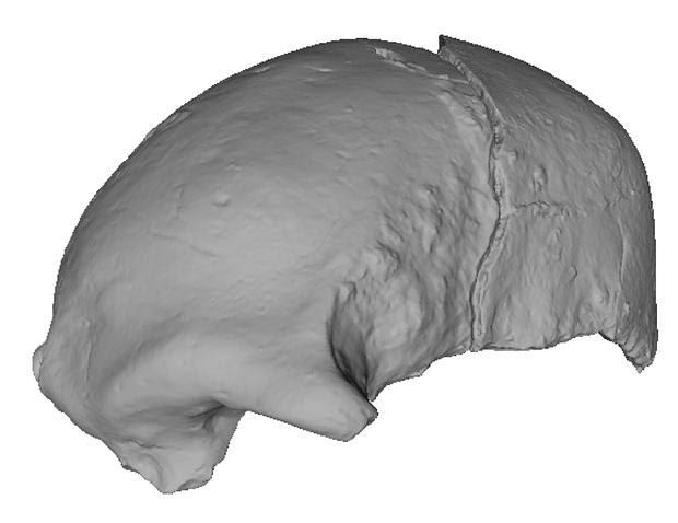 El fragmento de cráneo, mostrado aquí en 3D, muestra diferencias sutiles con otros de la misma época.