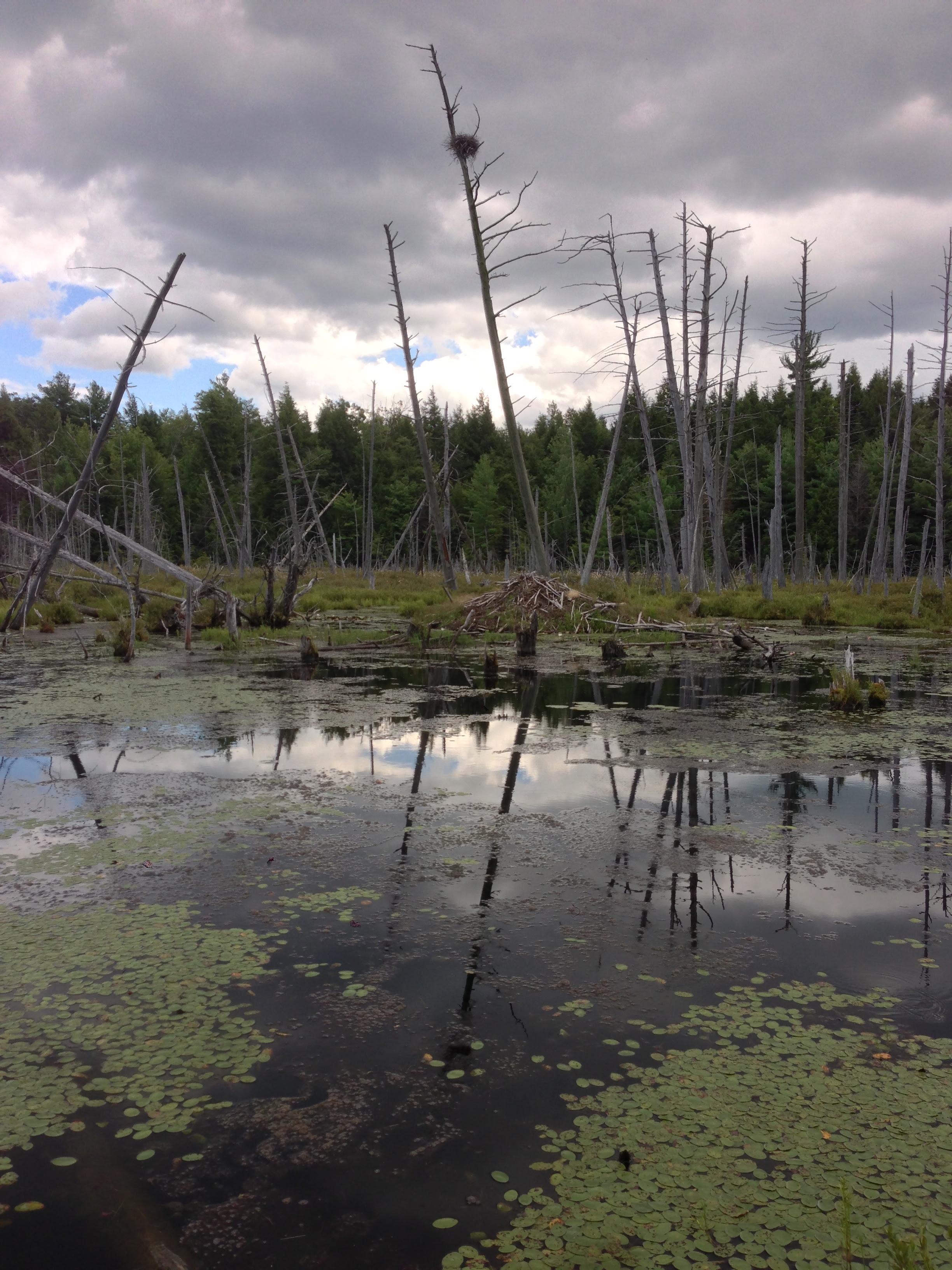 berry pond preserve
