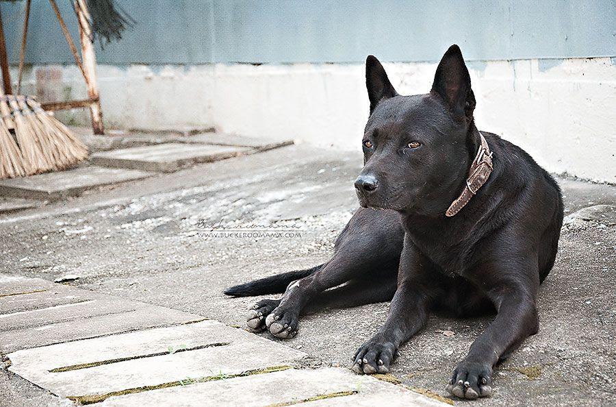 Mon - Mar 17, 2014 photo Black-dog-1_zps01c1f6d8.jpg