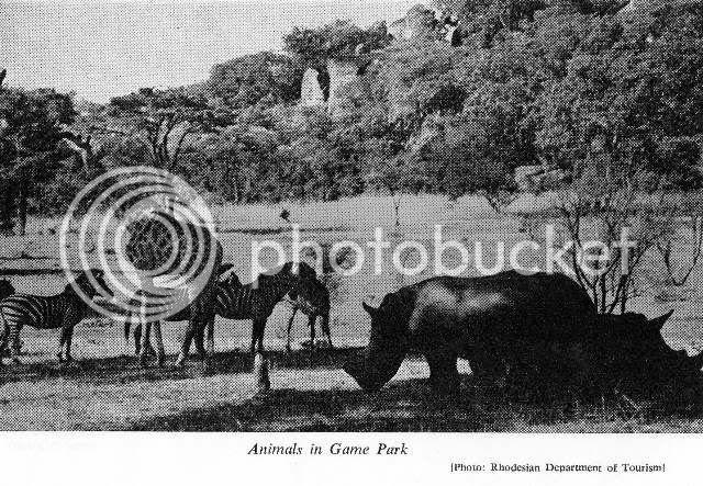 Animals in Game Park