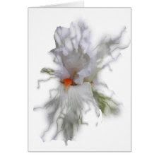 Translucent White Iris Card card