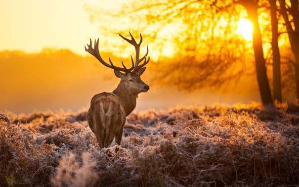 Ο Χειμώνας σε 35 υπέροχες φωτογραφίες (32)
