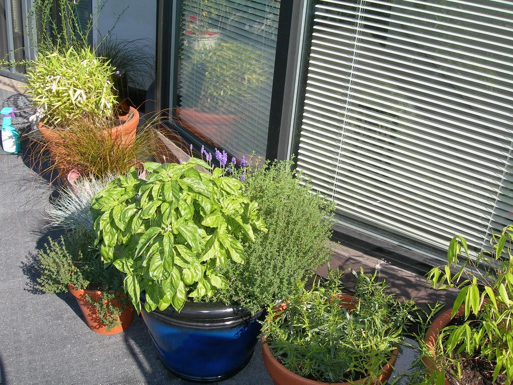 2009-07-19 Mixed Herb Pot (2)