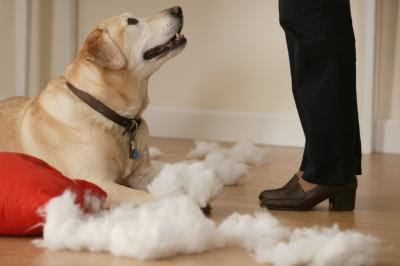Your dog has to know what she's done wrong, or else the behavior will continue.