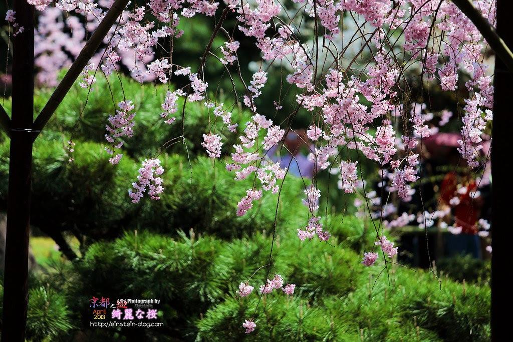 2013-04-04-11h10m31IMG_1401