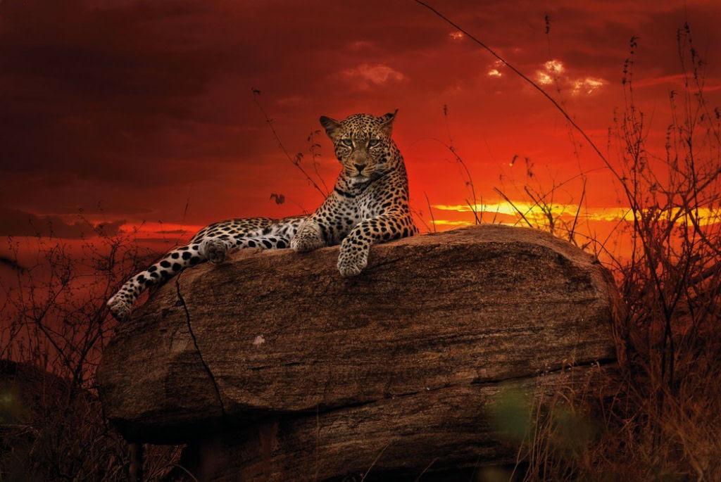 O lado colorido da África selvagem por Alex Bernasconi 08
