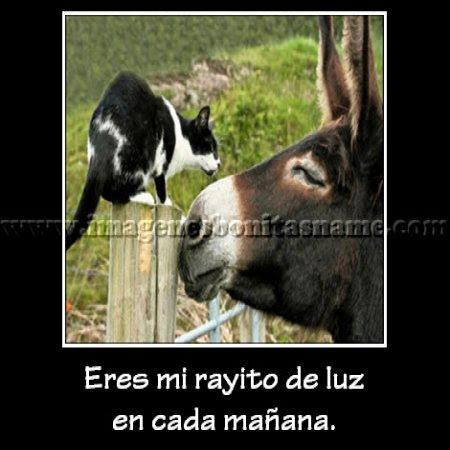 Burro Y Gato Enamorados Imagenes Bonitas Frases Bonitas