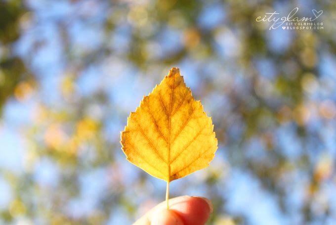 http://i402.photobucket.com/albums/pp103/Sushiina/autum4.jpg