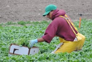California Field Worker