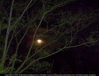 Misty moon through tree branches