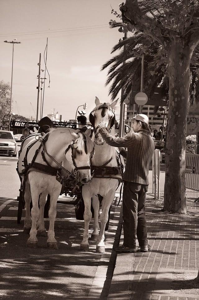 Las Ramblas Horse Rides [enlarge]