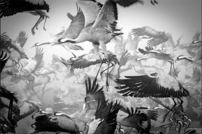 25 Photos of Animal Migration