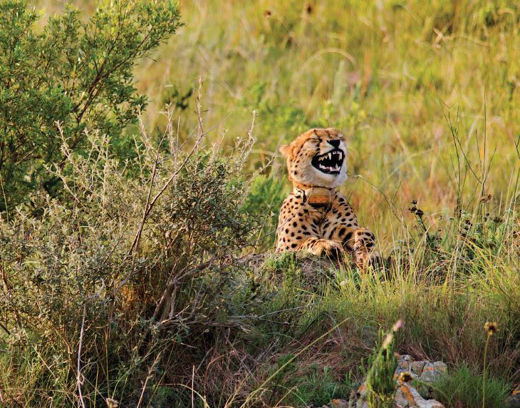 Конкурс на самые комедийный снимки животных