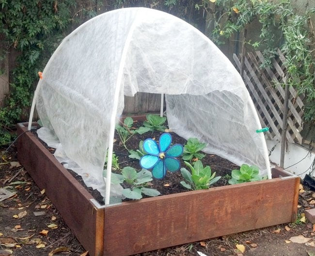 cheap DIY greenhouse made from pvc pipes