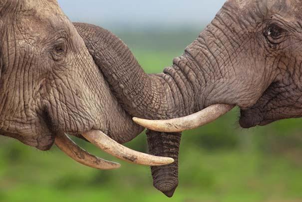 Υπέροχες φωτογραφίες φιλίας ζώων που θα σας φτιάξουν τη διάθεση (11)