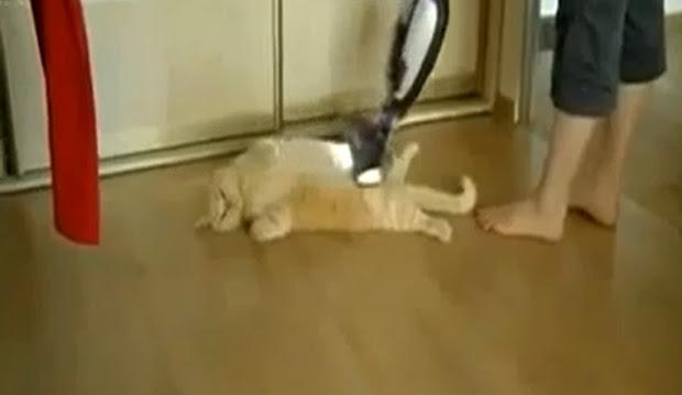 Vaccuming my cat: vídeo de gato sendo aspirado é o novo hit do YouTube (Foto: Reprodução/YouTube) (Foto: Vaccuming my cat: vídeo de gato sendo aspirado é o novo hit do YouTube (Foto: Reprodução/YouTube))