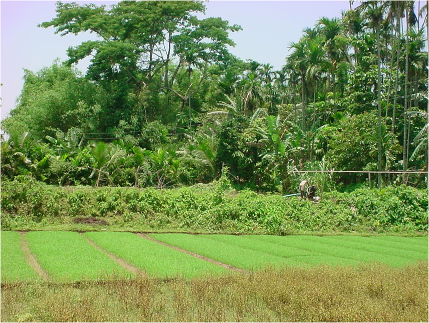 Capturing Traditional Practices Of Rice Based Farming Systems And Identifying Interventions For Resource Conservation And Food Security In Tripura India