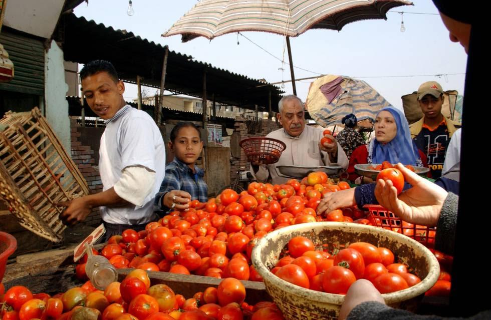 Un puesto de venta de tomates en El Cairo (Egipto).
