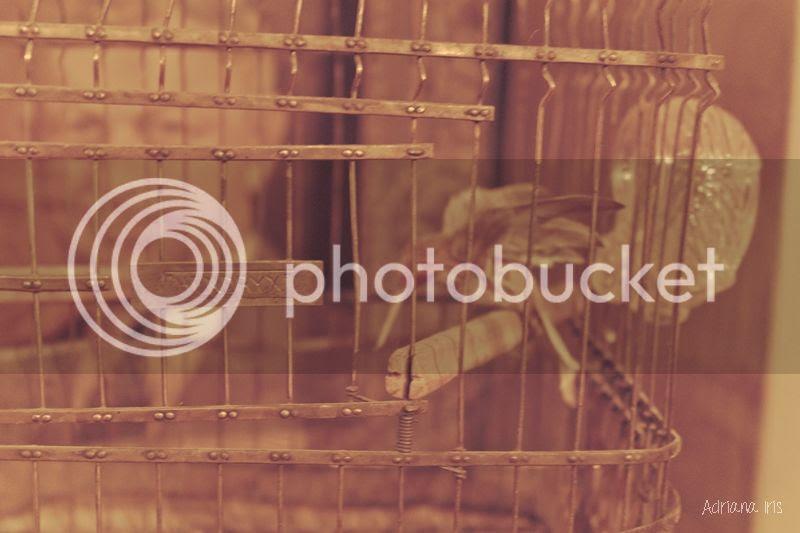 photo birdhouse_zps3871cca8.jpg