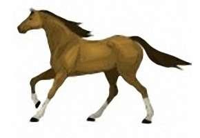 Ausmalbilder Pferde Ausdrucken