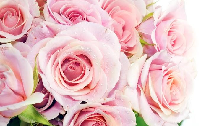 Beautiful Wallpaper Wallpaper Cave Beautiful Rose Flowers Images Free Download wallpaper