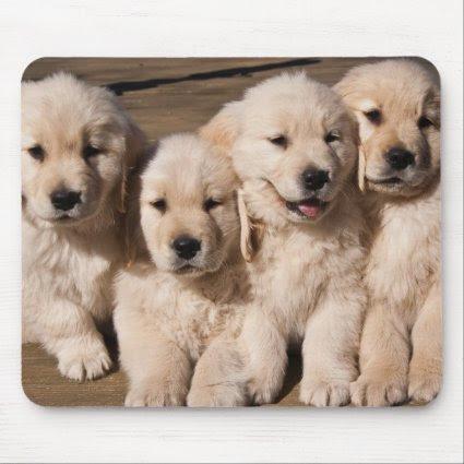 Sweet Golden Retriever Puppies Mouse Pads