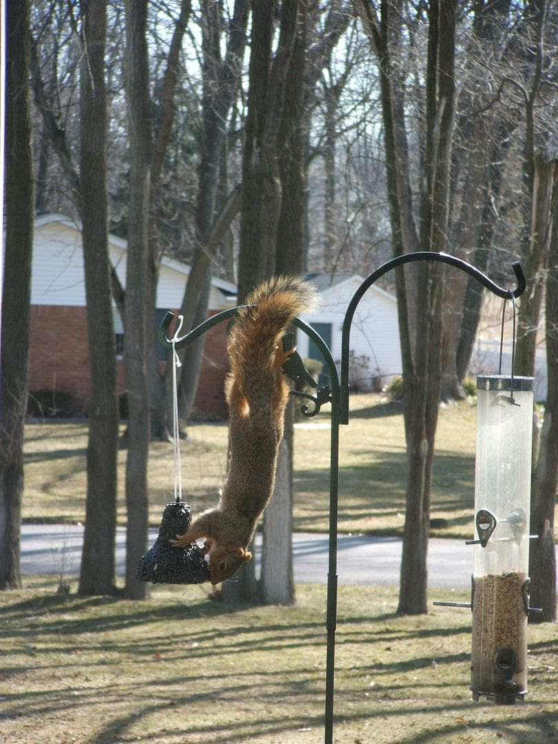 Squirrel by Angie Ouellette-Tower for godsgrowinggarden.com photo 005_zps5cec4c9c.jpg
