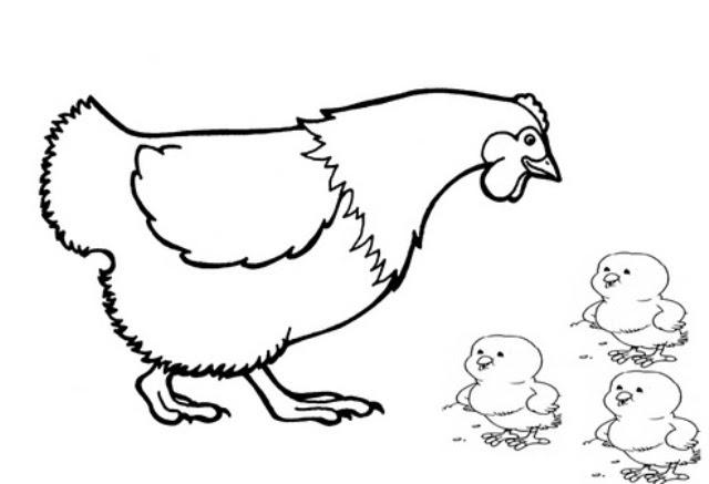 Zona Ilmu 2 Gambar Mewarnai Anak Ayam