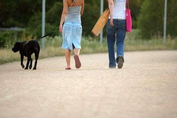 Pasear al perro… sin tirar de la correa