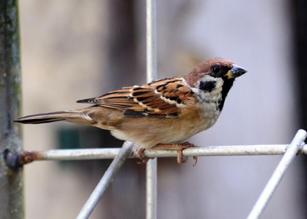 104  Gambar Burung Yang Mudah Dibuat  Paling Keren Free