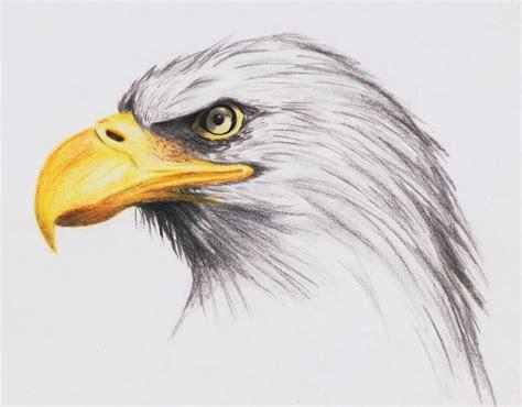 bald eagle  highdarktemplar  deviantart