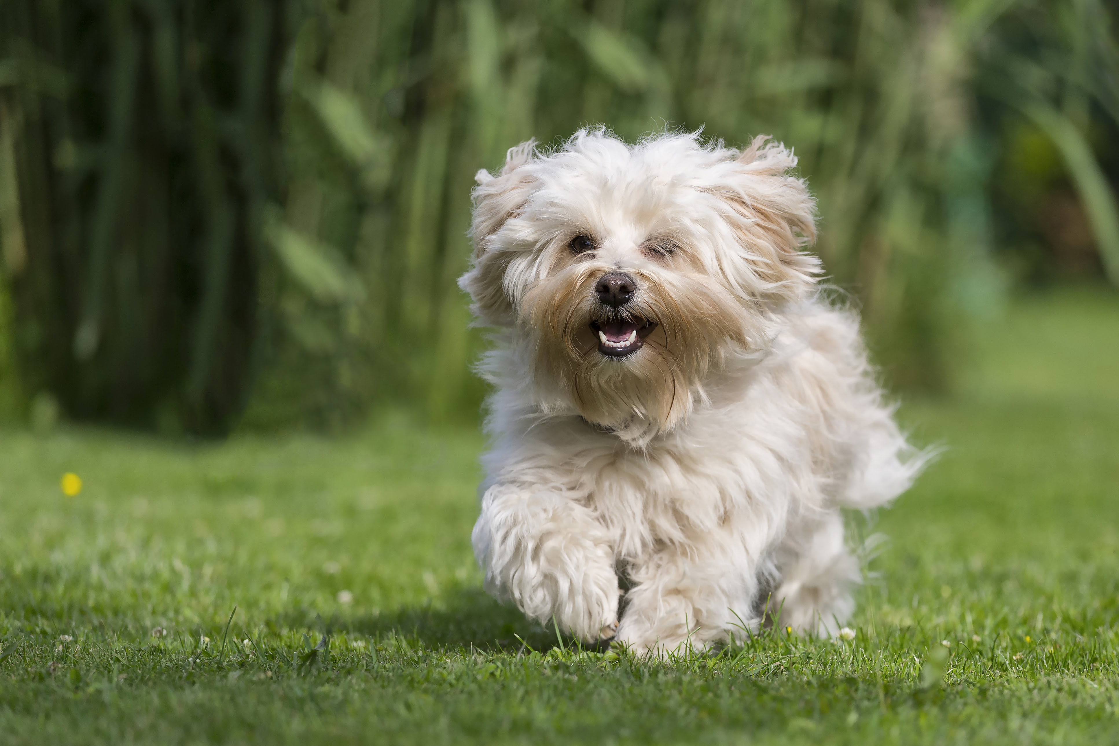 Image Gallery Small Dogs