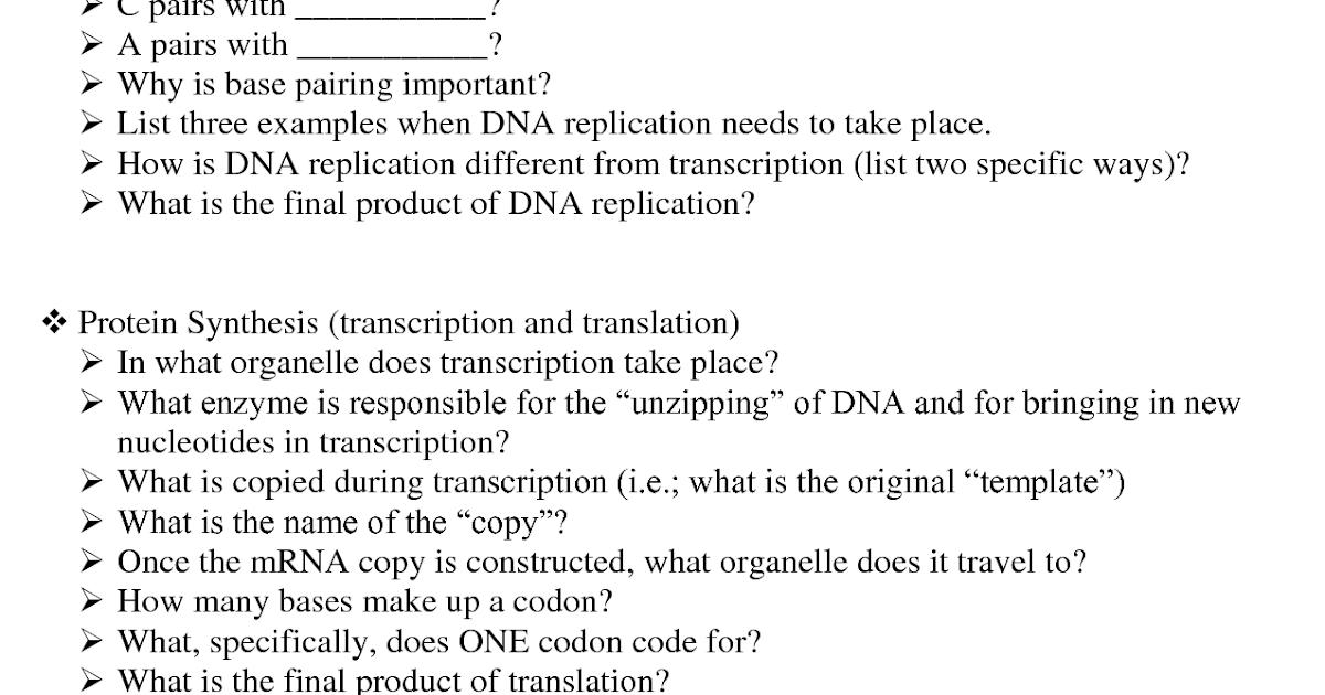 51 MODEL 2 DNA REPLICATION ANSWERS, REPLICATION ANSWERS ...