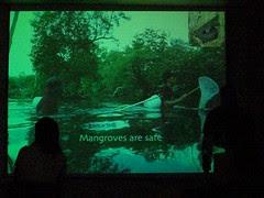 Mangroves are safe