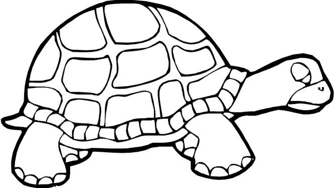 Coloriage A Imprimer Tortues 1001 Animaux