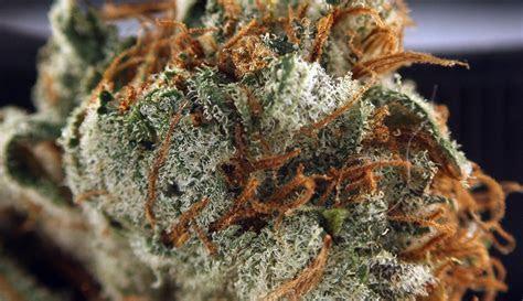 The Cake Marijuana Strain Review