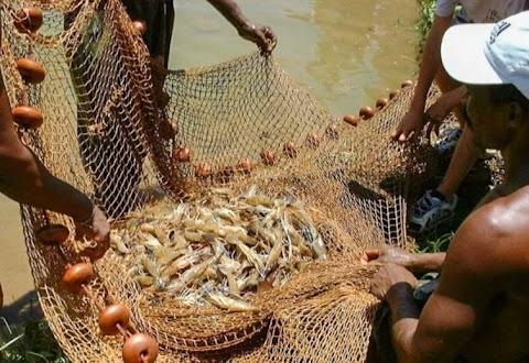 Produção de camarão no Brasil tem aumento de 11,4% em relação ao ano anterior e RN tem maior destaque com 43,2% do total