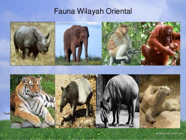 450 Koleksi Gambar Fauna Wilayah Oriental Gratis Terbaru