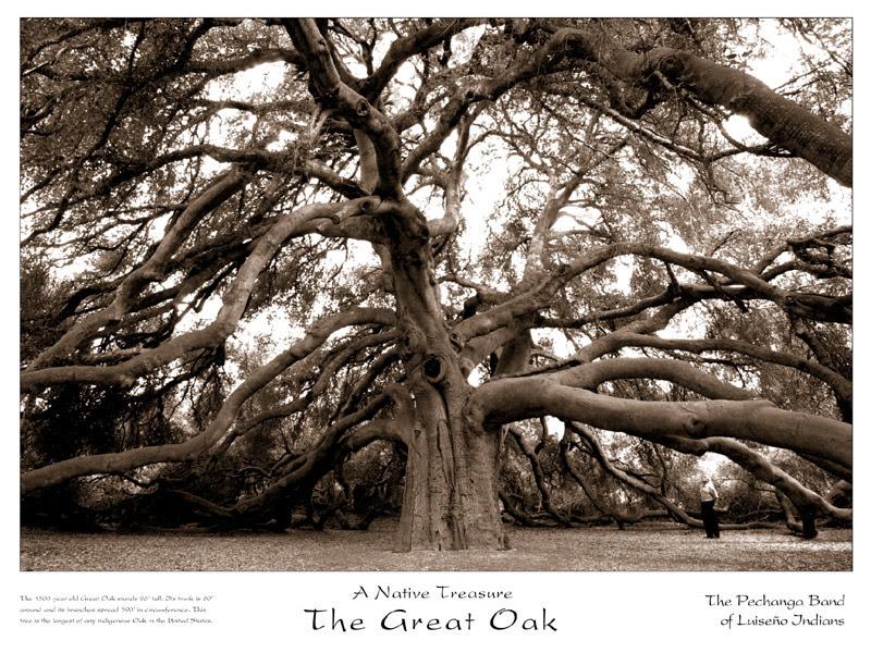 The Greak Oak