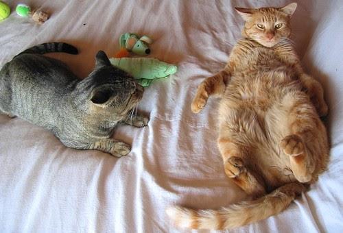 Pet Care Advice Cats