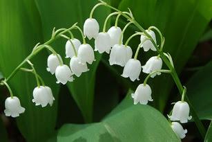 La Fleur Du Bonheur Happyculture Et Vous