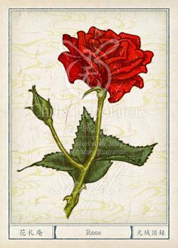 バラ薔薇 の花言葉誕生花イラスト チルの工房无域屋花札庵