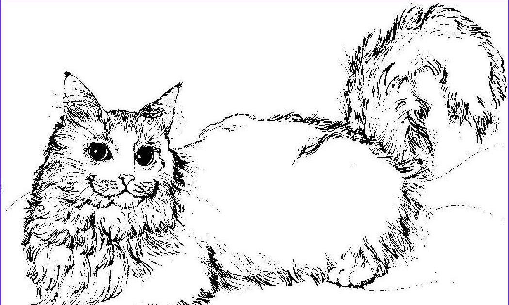 Realistic Tabby Cat Cat Coloring Pages