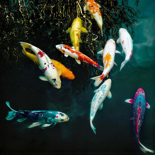 one fish, two fish... por •Sarah P•