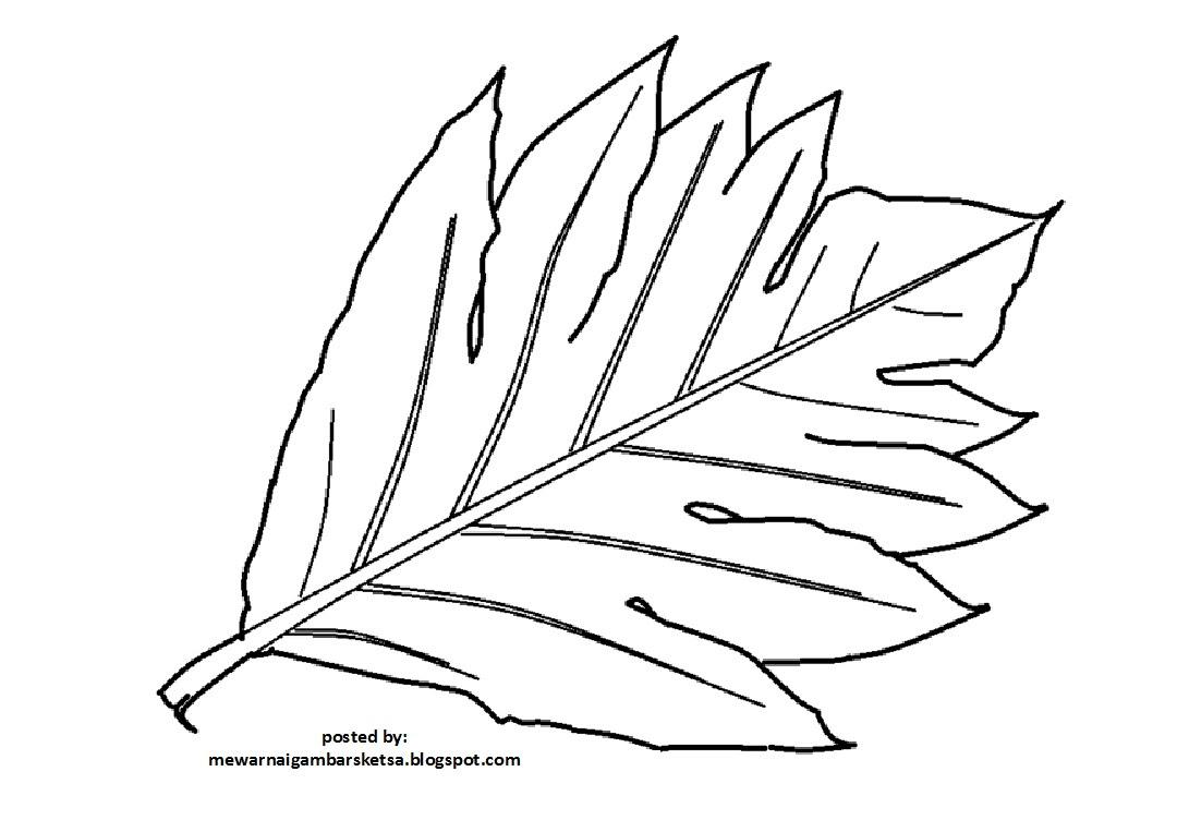 Mewarnai Gambar Sayur Wortel Auto Electrical Wiring Diagram