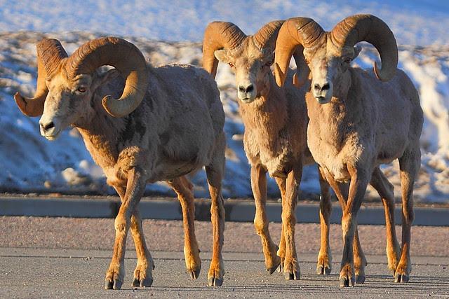IMG_3425 Three Amigos, Glacier National Park