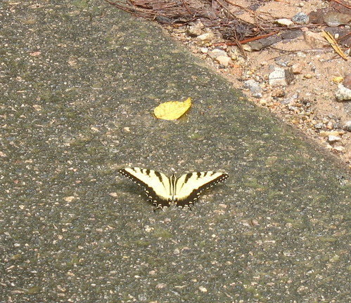 natnote butterfly
